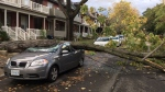 A fallen tree sits on top of a damaged car following high winds in Toronto Sunday October 15, 2017. (Tristan Phillips /CP24)