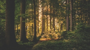 New research suggests that living near nature can has a positive effect on the brains of city dwellers. (Pexels)