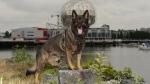 Retired Vancouver police dog, Teak, is seen in this photo from social media. (Twitter / Vancouver Police Department)