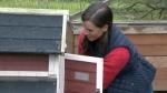 Sarah Martin-Mills works on the Growing Hope Farm on Sherring Street in Cambridge.