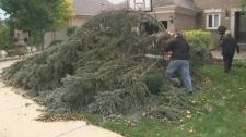 wind storm, damage, GTA