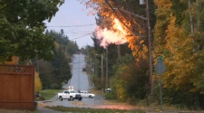 Strong wind caused a tree branch to snap and fall onto power lines in Courtenay, sparking a small fire. Oct .16, 2017. (CTV Vancouver Island)