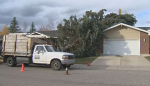 wind warning, environment canada, windy, weather,