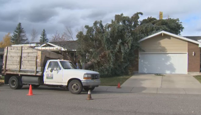 A large tree fell on a garage and was one of many that were damaged by strong winds on Tuesday afternoon.