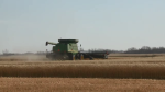 Travelling farmer helps others harvest crops