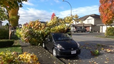 Storm knocks out power for thousands in B.C.