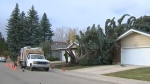 A strong wind storm in Calgary knocked down trees all over the city, including one that fell onto this southeast home.