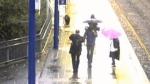 Black bear blamed for commuting delays