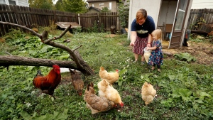 In this Tuesday, Sept. 26, 2017, photo, Tanya Keith, of Des Moines, Iowa, and her daughter Iolana feed their chickens in the backyard of their home, in Des Moines.(AP Photo/Charlie Neibergall)