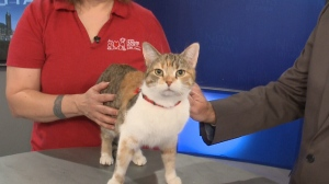 Pet of the Week: Skittles the Cat