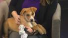 Edmonton Humane Society puppy Delilah