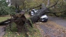 Tree topples, damaging cars in West End