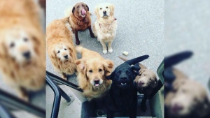 UPS drivers have a Facebook group for dogs they me