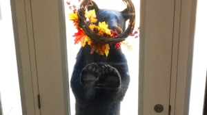 Knock Knock, Who's Bear? Photo by Kim Bouwman.