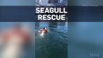 Man jumps into ocean to rescue seagull