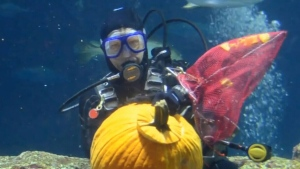 Divers create ghoulish gourds underwater