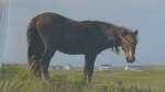 A weekend conference in Halifax is shedding light on the mystery of Sable Island.