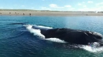 Experts seek solutions for right whale