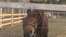 CTV Northern Ontario: Equine Assisted Learning