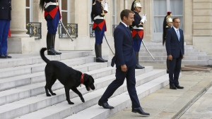 France's President Emmanuel Macron walks down the steps of the Elysee Palace, with his newly adopted dog, a labrador crossed griffon named Nemo, on Aug. 28, 2017. (Francois Mori / AP)