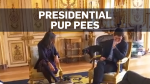 French president's dog pees during meeting
