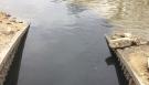 Sludge spotted flowing into Assiniboine (Source: Jamie Dowsett/CTV News)