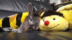 BunnyBee (Vicky Mok/CTV Viewer)