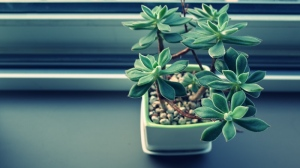File photo of a houseplant. (Pexels)