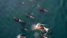 More protection for orca whales coming this spring