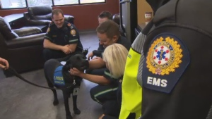 Delray, an accredited assistance dog, meets with a group of first responders in Alberta.