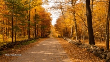Chemin Barnes that runs to the entrance of Kingsmere Estate in the Gatineau Park.  The last of the autumn leaves have disappeared with yesterday's high wind, but we have images to remind us how beautiful our part of the world in Autumn splendour. (Bruce Kennedy/CTV Viewer)