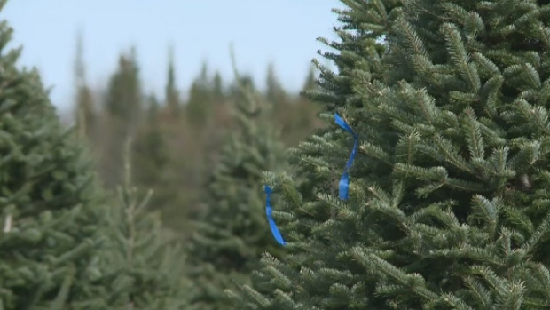 Christmas tree farmers in the Maritimes are stepping up security measures to try and deter thieves. (CTV)