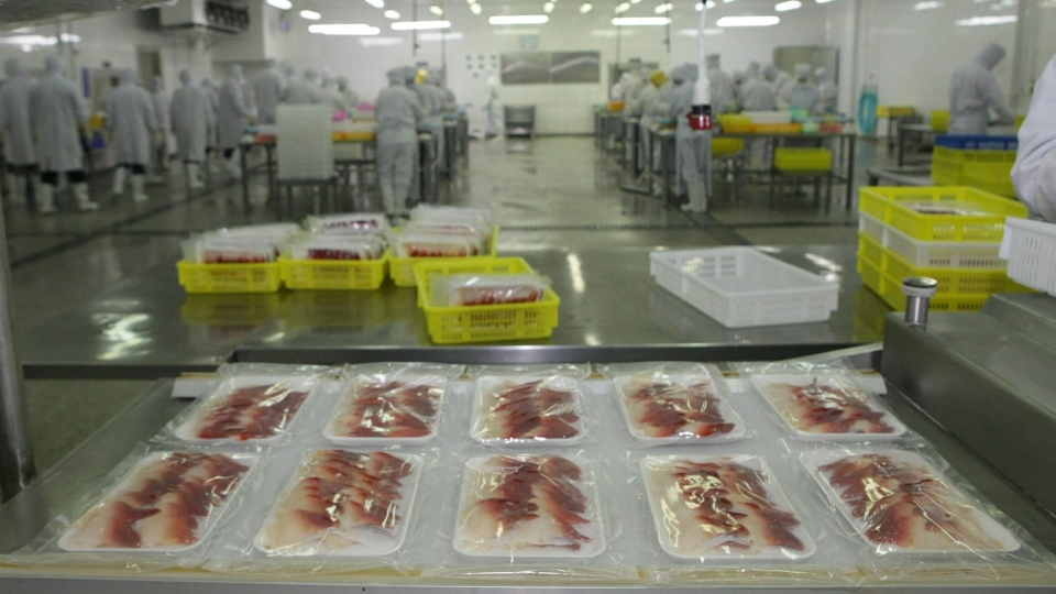 In this file photo, Canadian surf clams are packaged for sale in the Chinese market at the Clearwater Seafoods Limited Partnership facility near Qingdao, China, Monday, October 31, 2011. (MARKETWIRE PHOTO / Fisheries and Oceans Canada)