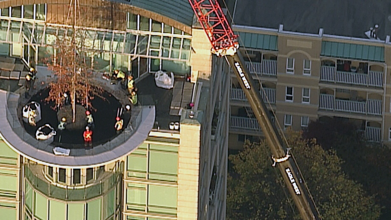 An oak tree is placed in a soil bed on the roof of a Vancouver condo building on Wednesday, Nov. 1, 2017.