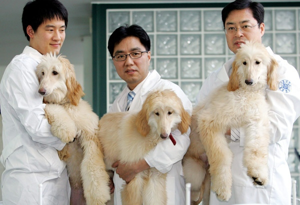 Dog Shows Vancouver Island