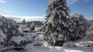 Snow accumulated in Central Saanich in November this year, but it doesn't look like it'll be falling on Christmas. (Photo: Darren Morson)