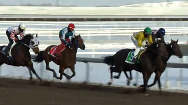 Balzac Horse Racing