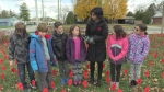 700 poppies go up on school's front lawn