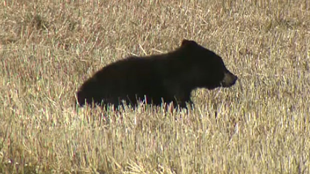 Area residents called on the province to step in after an injured cub was seen west of the city.