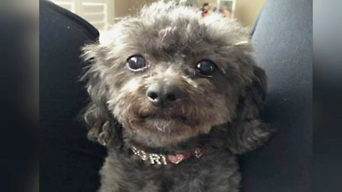 Police are investigating after a small dog named Negrita was stolen from a North York home over the weekend.