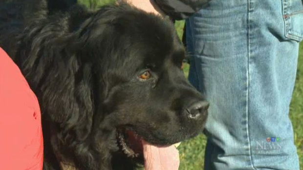 N.S. dog has new shot at life thanks to furry donor friend