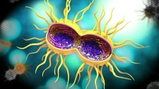 STI infection rates up