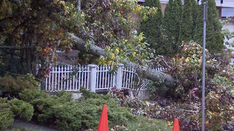 A windstorm that struck in November 2017 sent trees crashing down onto power lines and even a Surrey home.
