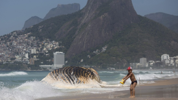 A boy plays near the carcass of a humpback whale on Ipanema beach, in Rio de Janeiro, Brazil, on Nov. 15, 2017. (Silvia Izquierdo / AP)