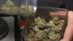 Regina researchers weigh in on pot regulation