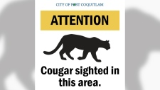 Cougar spotted in City of Port Coquitlam