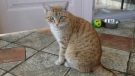 Cat Cafe Photo Gallery/IMG_0236.JPG