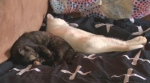 The two kittens left on a rural road near Millet, Alberta have a new home.
