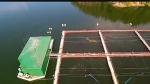 Fish farm applies to dump hydrogen peroxide