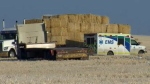 An ambulance in a field in the 16000 block of 69 St SW after a worker was injured by a falling bale of straw on November 17